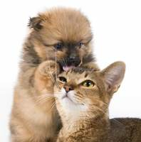 dog-picture-photo-puppy-licks-cat